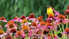 How to Bring Birds to Your Backyard Garden in Iowa