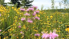 Welcome to Iowa Native Plants