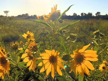 February 2021 Events: Iowa Native Plants Education and Training