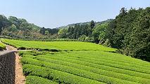 まるかわ茶園_写真.jpg