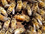 村上養蜂.jpg