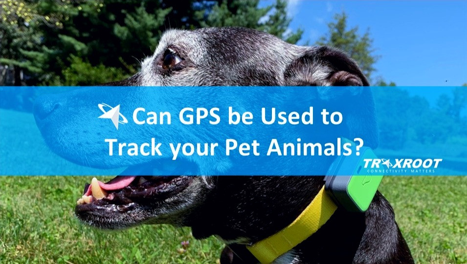 Can GPS be Used to Track your Pet Animals? (GPS Pet Trackers)