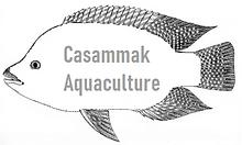 Casammak logo medium 1.png