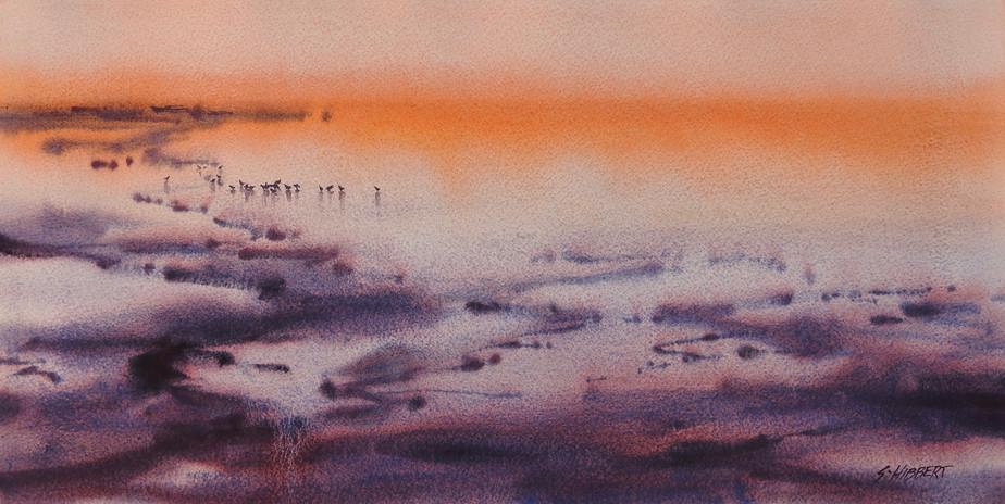 Dawn Coral Bay