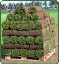 Turf & Soil