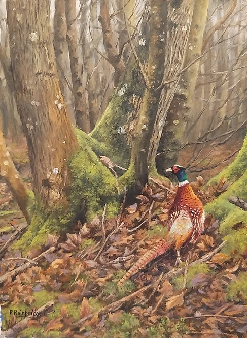 Pheasant In The Woods