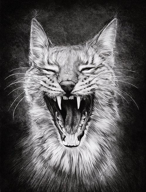 Lynx Like Fun