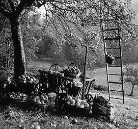 apple buckets.jpg