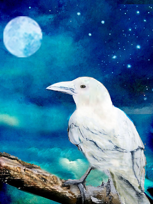 The White Raven - Fundraiser for Wildlife Recovery Centre