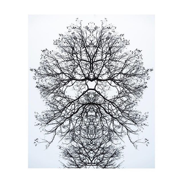 #tree #mirrorimage #fineartphotography #