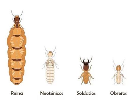 Productos para fumigar contra termitas en Merida