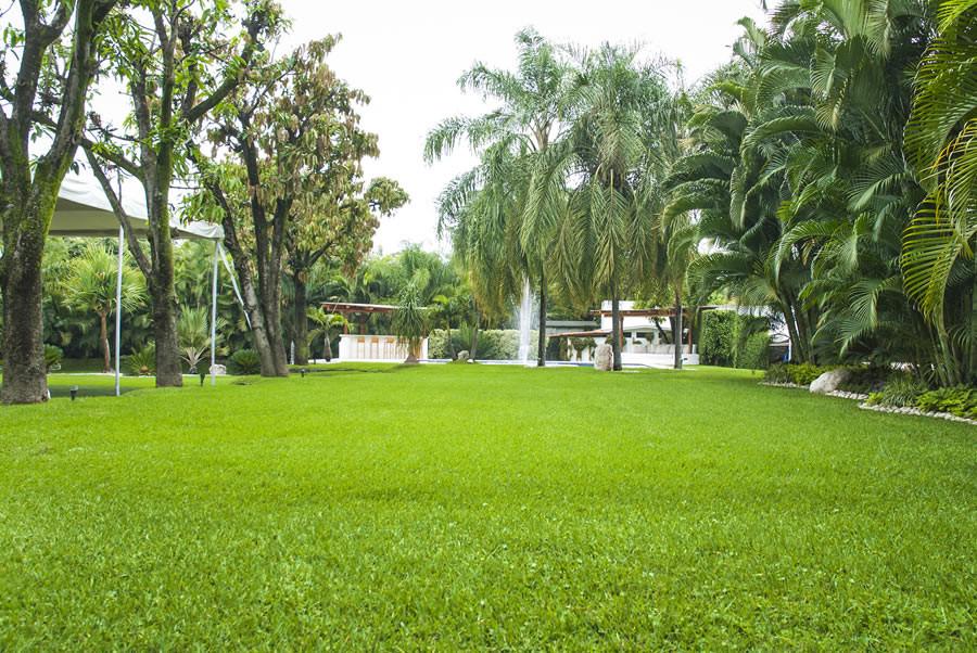 Servicios de Jardineria, Mantenimiento de Jardines, Diseño de Jardines, Control de plagas en jardines, herbicidas