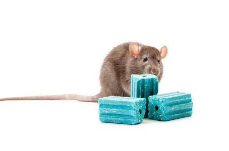 Fumigacion ratones merida