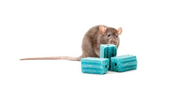 Veneno para ratones, Contrac Blox, Raticida, Rodenticida, bromoadiolona