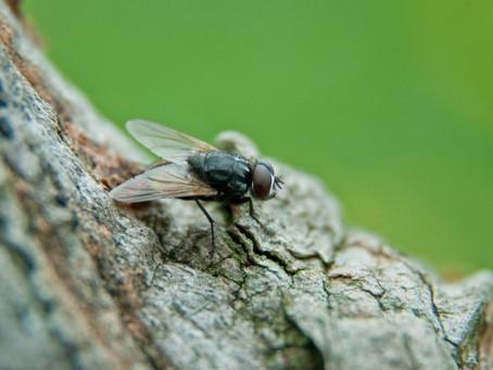 Control y fumigacion de moscas