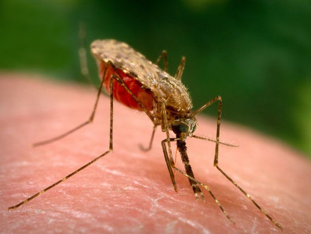 Fumigar mosquitos Mérida
