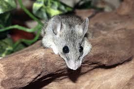Roedores, ratas y ratones.