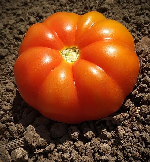 img tomate.jpg
