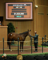 Hip 740 Ghostzapper Filly. Purchased by Stonestreet Stables.