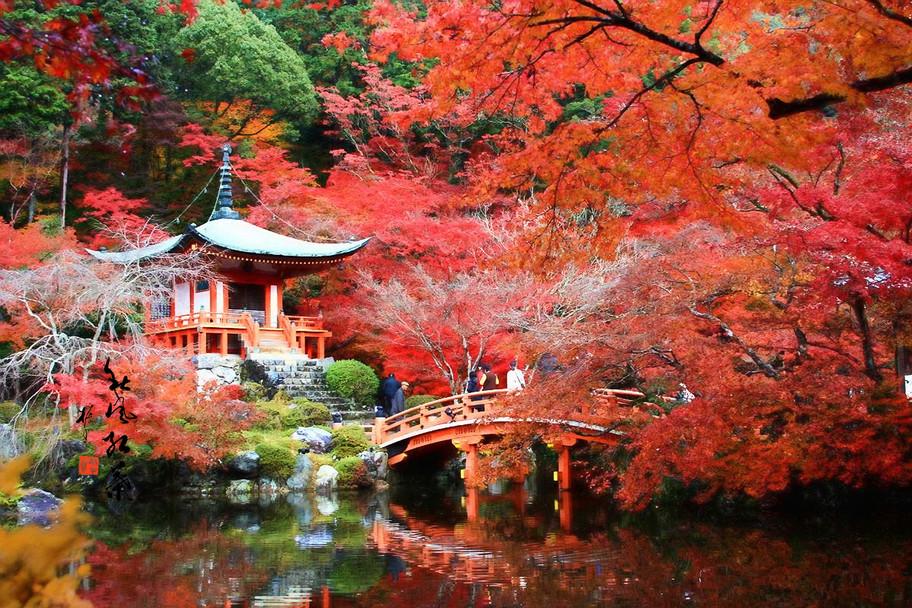 秋楓紅葉_133.jpg