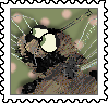 swallowtail-2021-flit_orig.png