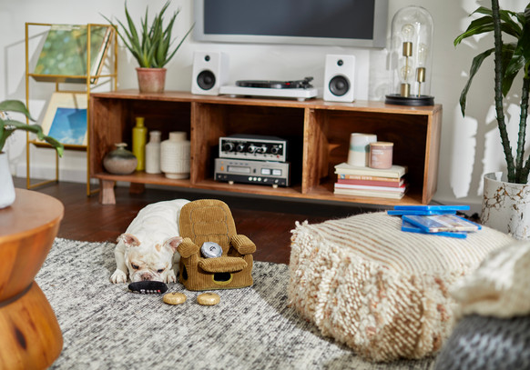 """Set Styling for Chewy's """"Petflix & Chill"""" Campaign"""