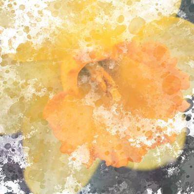 Mixed media watercolor digital painting yellow daffodil