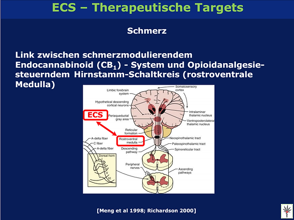 Medizinisches Cannabis ECS Therapeutische Targets
