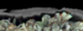 cbd samen kaufen, acheter graines de chanvre UE, certifie, zertifiziertes Hanfsaatgut, Zertifizierte Hanfsorten, Hanf Sortenkatalog, Hanfzucht, legal Cannabis seeds, certified hemp seed, hempseeds certified, huile de cbd, cbd öl, cbd tropfen kaufen, cbd schweiz, legale hanfsorten, beste cbd genetik, cbd phenotypen,hanfsamen kaufen, cbd kaufen, buying hempseeds, certified hemp, wholesale, hanfsamen engros,cannabis zucht, züchter, medizinisches gras, züchten, medizinische cannabis sorten, medizinisches kannabis, grassamen, cbd,