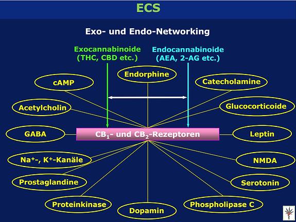 Medizinisches Cannabis ECS Exo- und Endo-Networking