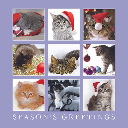 Christmas Cats in Squares