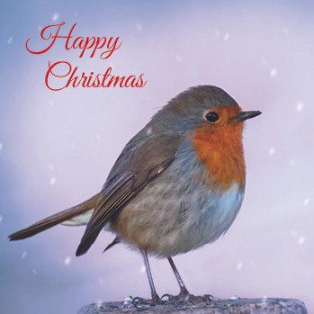 Merry Christmas Robin