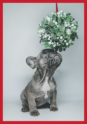 Dog and Mistletoe