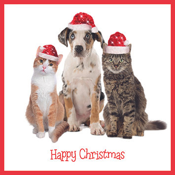 Dog, Cat and Christmas Hats