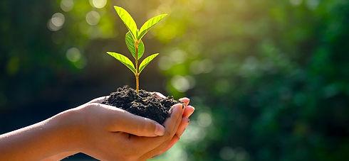 main-plante-ecologie-rse_edited.jpg