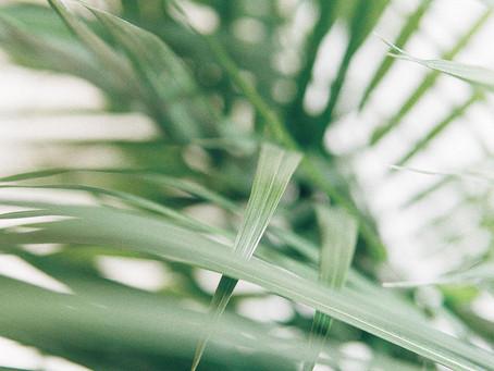 A Onda Verde
