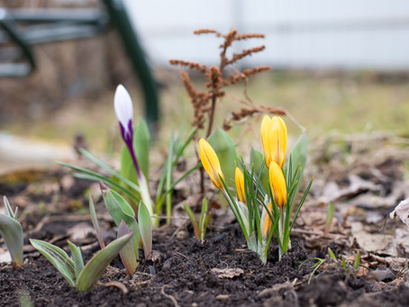 Весна в Ногинске