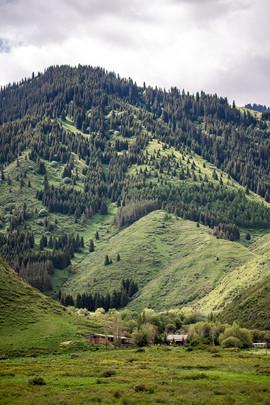 Поросшие лесом