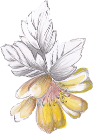 Handdrawn-flowers-1.png