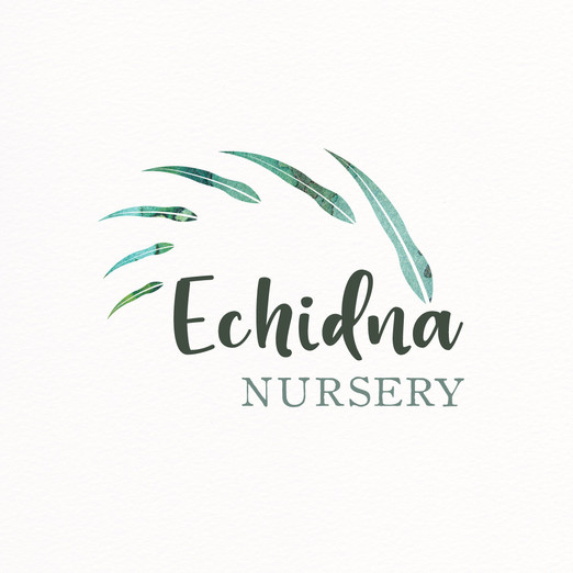 Echidna Nursery Logo Design by Wild Honey Creative