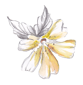 3-coloured-flowers-.png
