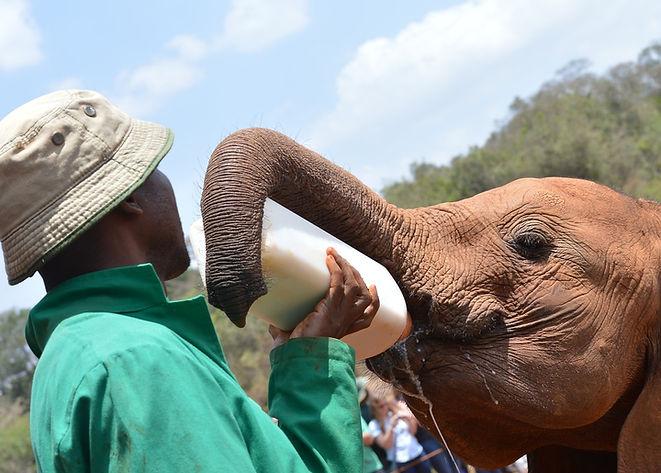 Elefante bebe.jpg