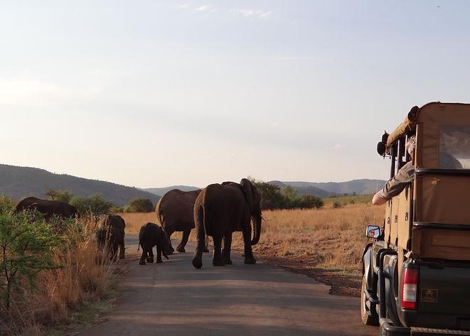 Parque Nacional Pilanesberg.JPG