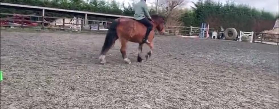 Wayne Gordon Horse Riding Footage