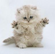 cat_long.JPG