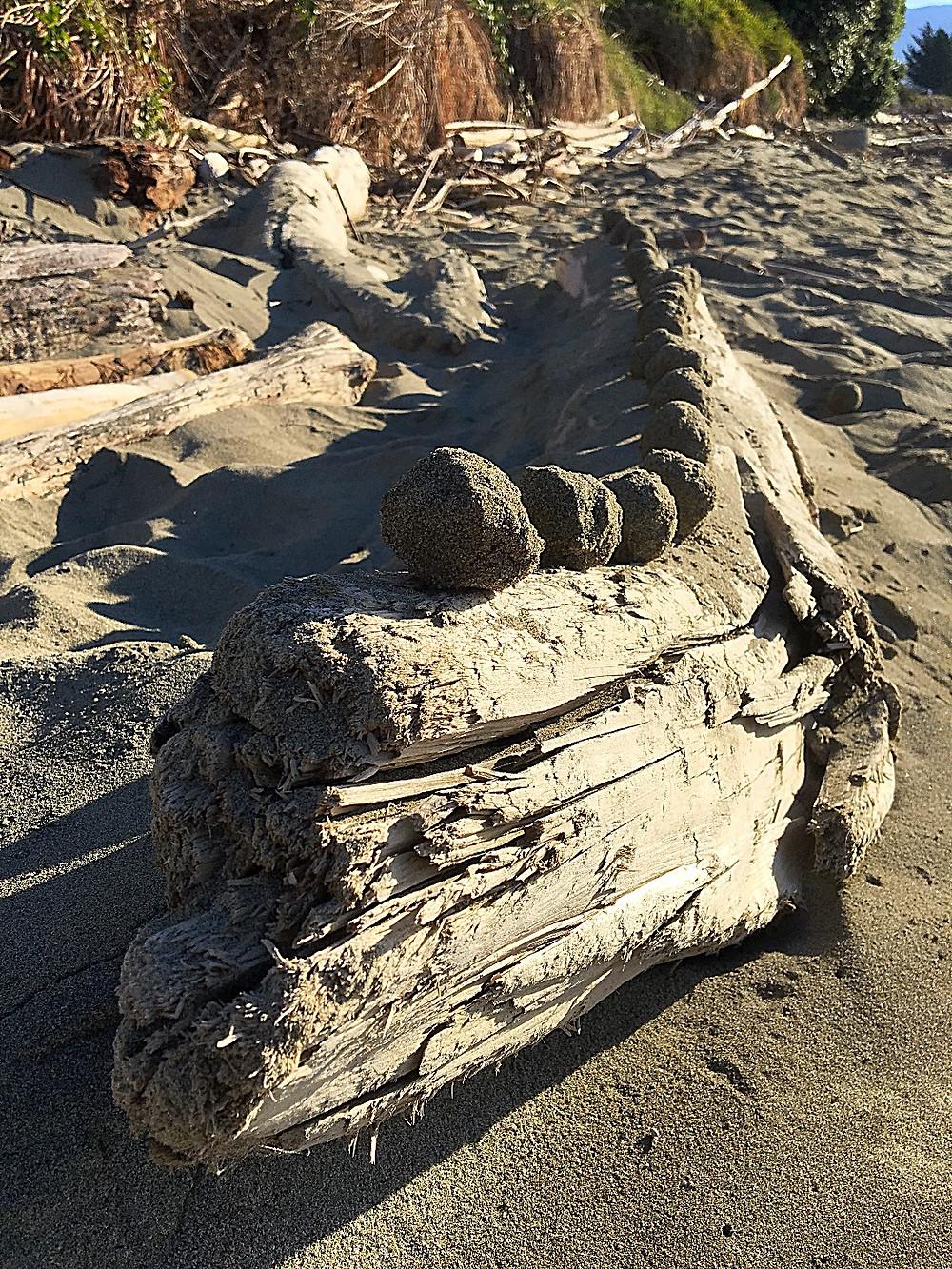sand balls on a log