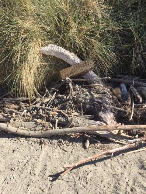 poem amongst driftwood