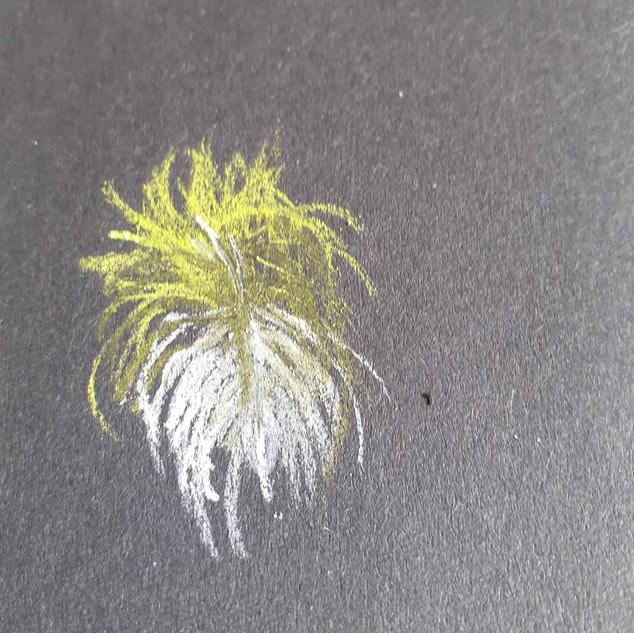 kea feather