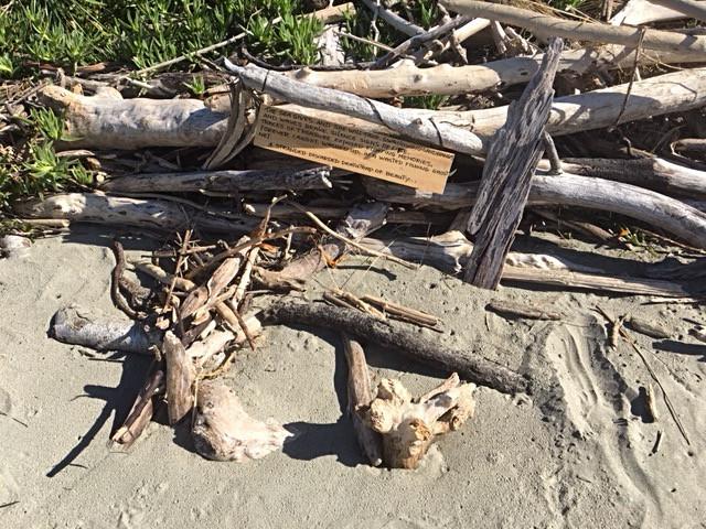 a poem amongst driftwood