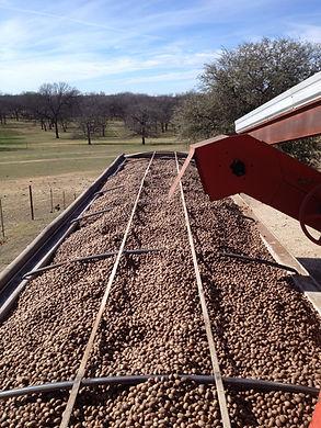 Artesian Ranch - Semi Trailer full of Pecans